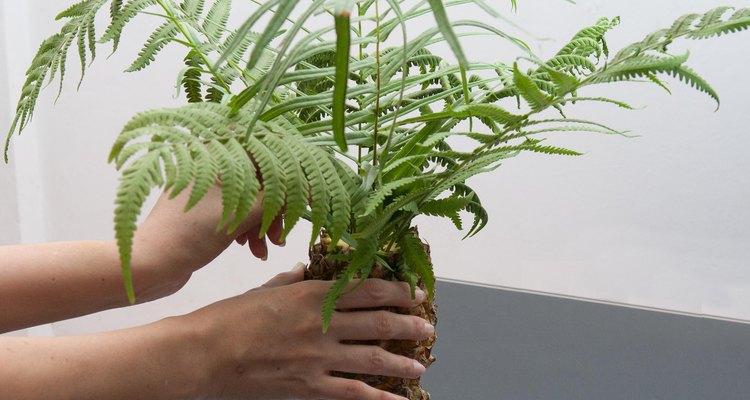 Coloque as folhas de palmeira