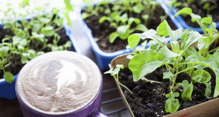 Plantar os próprios alimentos assegura uma dieta mais saudável