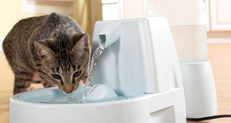 Los gatos aman el agua en movimiento.