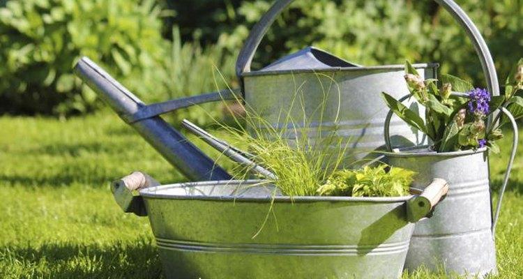 Puedes dejar remojando bolsitas de té usadas en agua para evitar la formación de hongos en tus plantas.