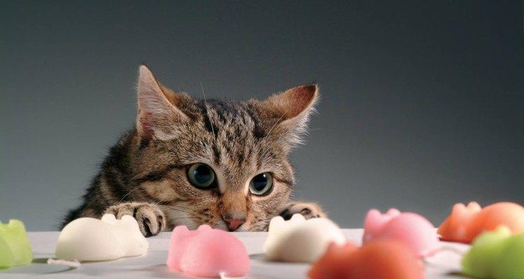 Tienes que satisfacer las necesidades emocionales de tu mascota.