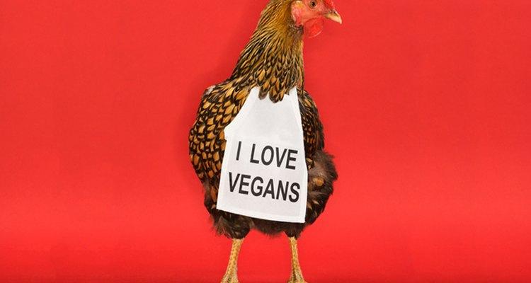 chicken wears bib with text: I love vegans