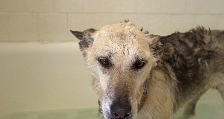 Usa una toalla absorbente para retirar el agua de la piel de tu perro.