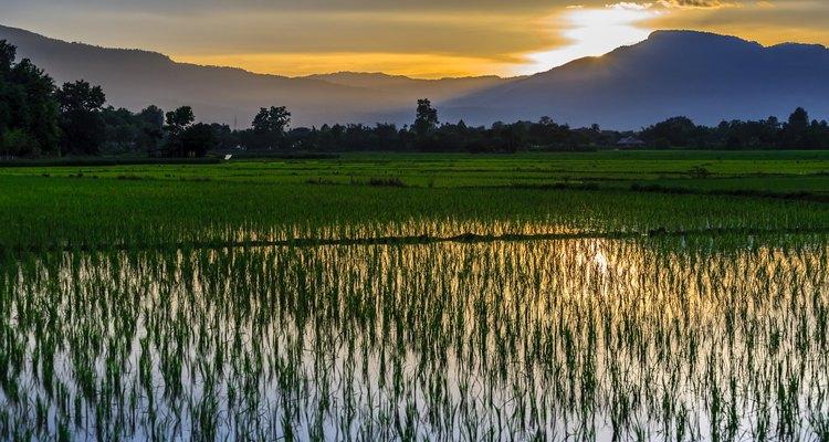 Campo de arroz alagado e seu impacto ambiental