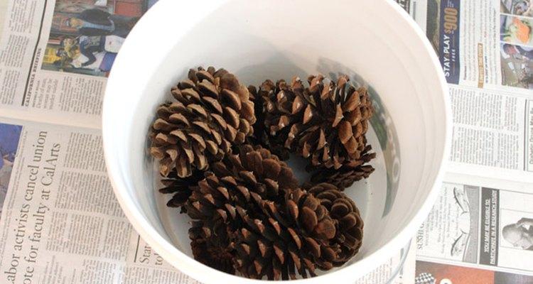 Desbote as pinhas em pequenas quantidades