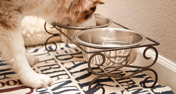 Los salvamanteles hacen que la limpieza de la zona en la que come tu perro sea muy sencilla.