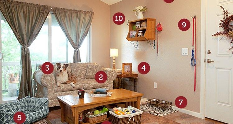 Todos, incluso tu mascota, se beneficiarán de tu diseño de interiores amigable para las mascotas.