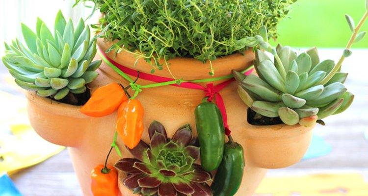 Cuida de tu jardín jardín de hierbas y de suculentas.