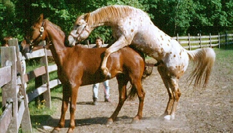 How to Breed Horses   Animals - mom.me
