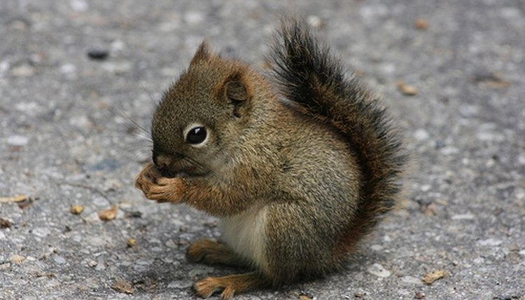 How to Talk to Squirrels | Animals - mom me