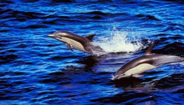 Dolphins are intelligent, playful and a good subject for a school science project.