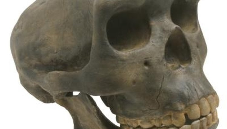 The sub-field of physical anthropology includes the study of early human remains.