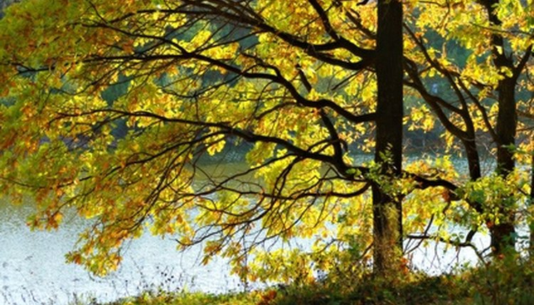 Discussing changes in nature helps children to understand seasonal change.