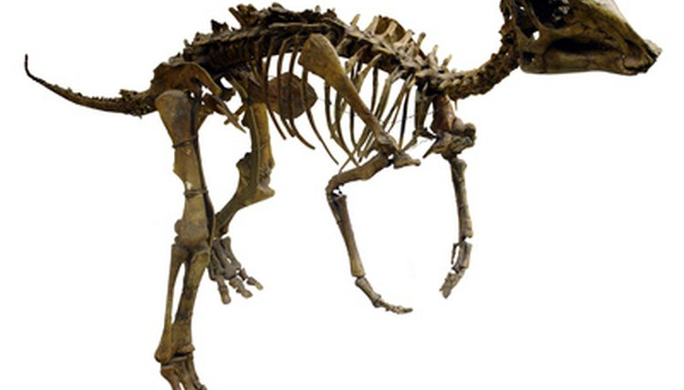Students can participate in a variety of science projects about dinosaurs.