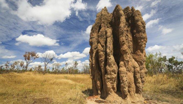 Termite mound in Australia.