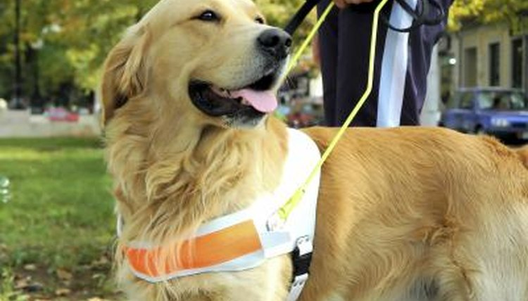 A man holds the harness of his guide dog.