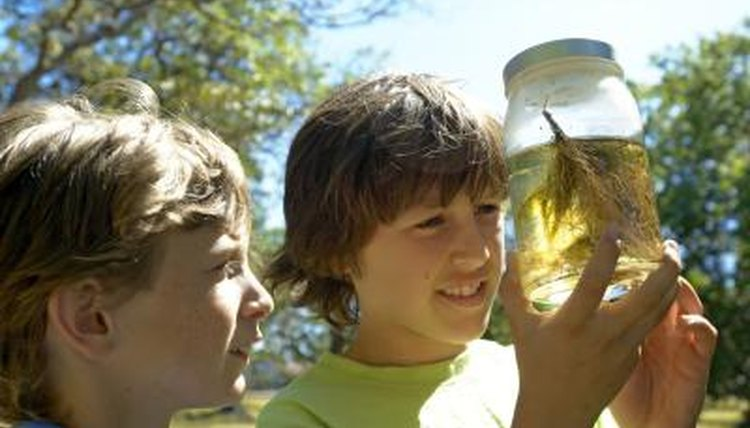 Two boys look at a pond life sample in a glass jar.