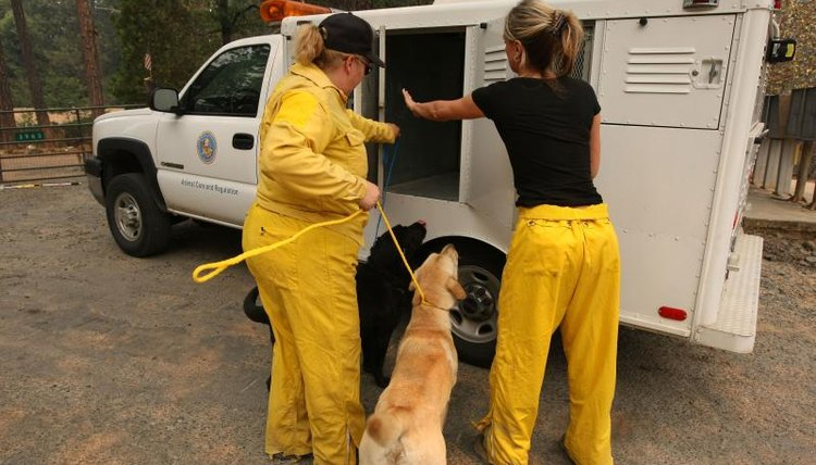 Animal control officers, an abandoned pet