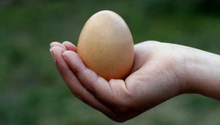 "A woman's hand cradle the ""baby"" egg."
