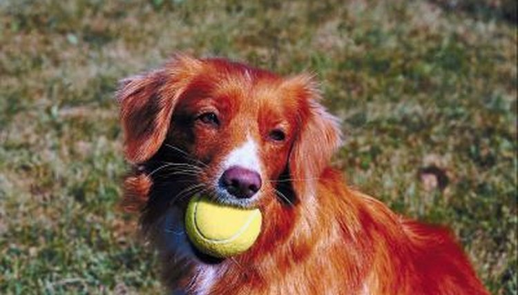 Dogs that get plenty of exercise are less likely to cry out of bordeom.