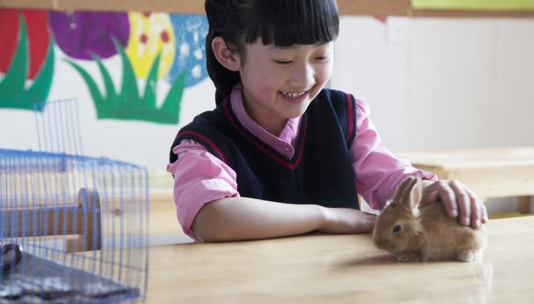 Young student petting baby bunny in classroom.