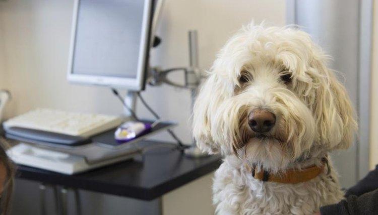 Dog in a vet's examination room.