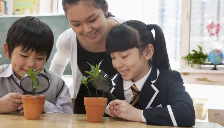 Students in classroom examining plants with teacher.