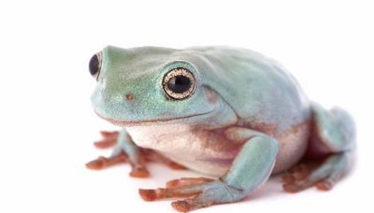 Anatomy of the Internal Organs of a Frog | Animals - mom.me