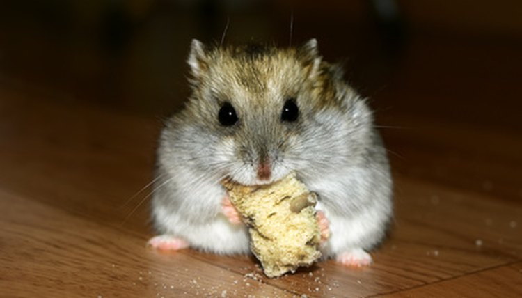 Fresh Food Hamsters Can Eat