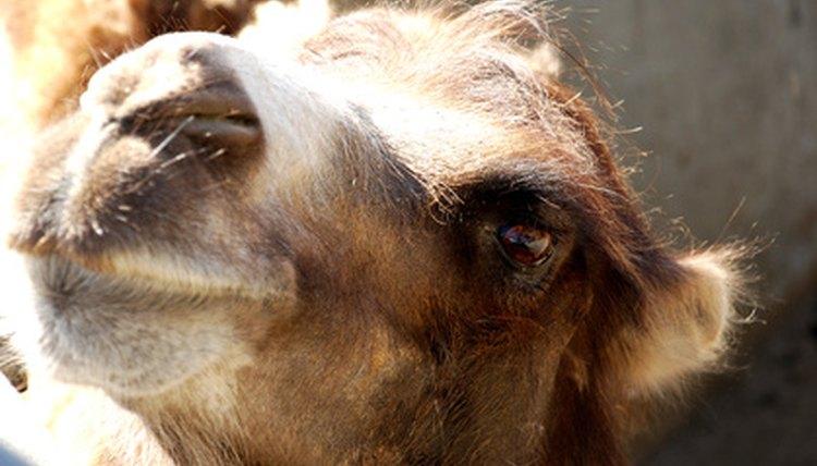 What Animal Has Three Eyelids Animals Mom