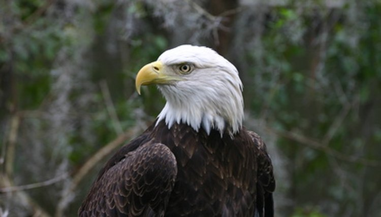 An eagle in the game of golf is two strokes under par on a single hole.