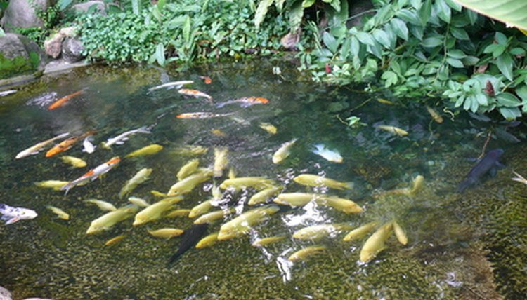 Fish In A Pond Image By Mircea Rosescu From Fotolia