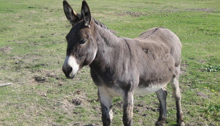 what are the treatments for flies on donkeys animals mom me