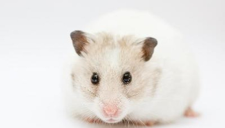 Hamster Care Diagram - Wiring Diagram Content