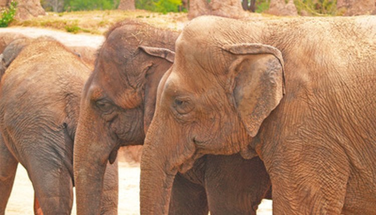 Elephants have long been considered a symbol of the GOP.