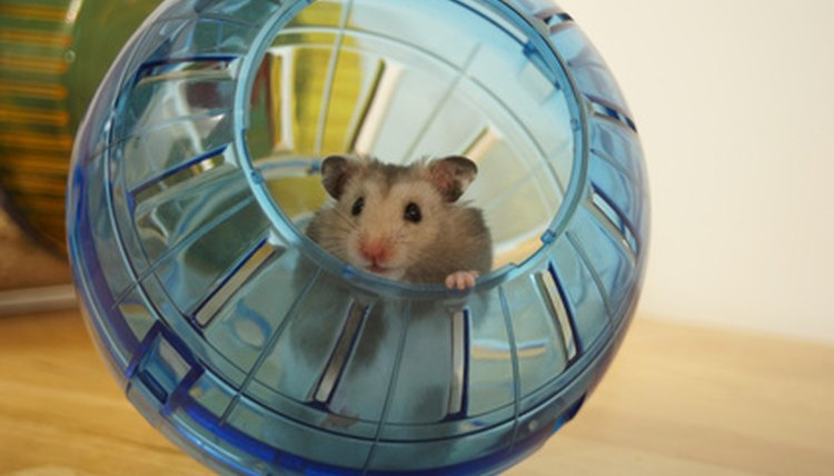 What Does It Mean When Your Hamster Just Runs Around in