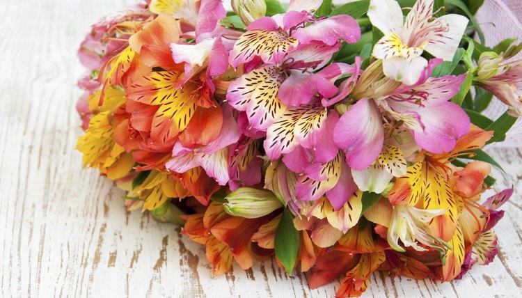A bouquet of alstroemeria flowers.