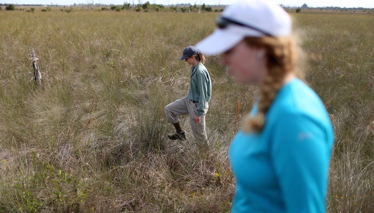 Biologists Track Northern African Pythons In Florida's Everglades