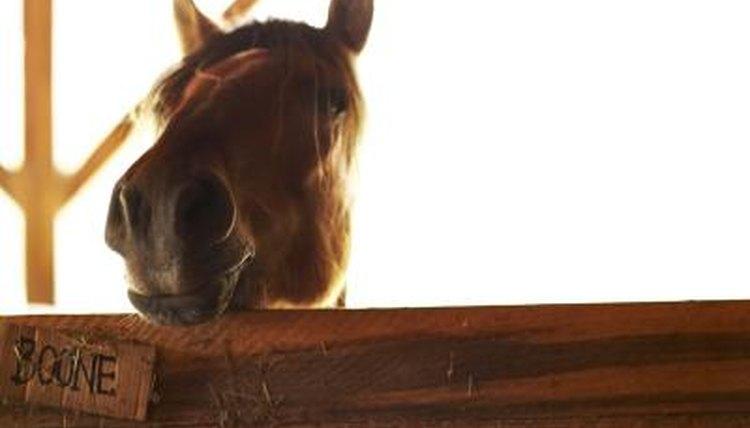 A Homemade Odor Neutralizer for a Horse Barn | Animals - mom me