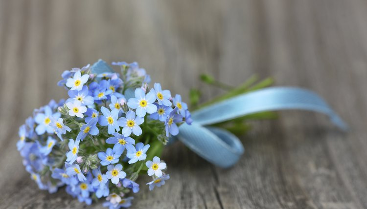 A nosegay of tiny blue forget-me-nots on wood.