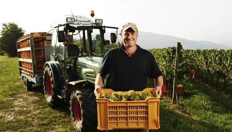 Farmer holding a box with grapes