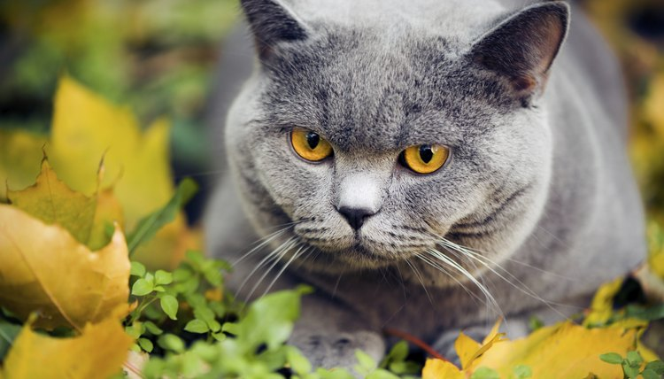 Home Remedy Dewormer for Cats   Animals - mom me