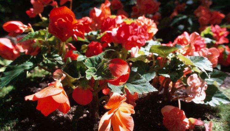 A floral garden