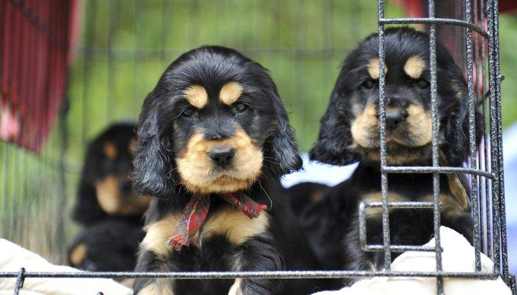 puppies at pet store