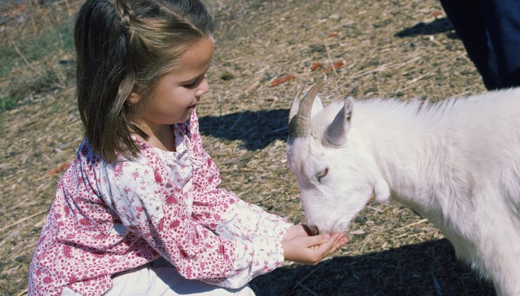 Take your preschool kid to a petting zoo or working farm and give them some hands-on experience.
