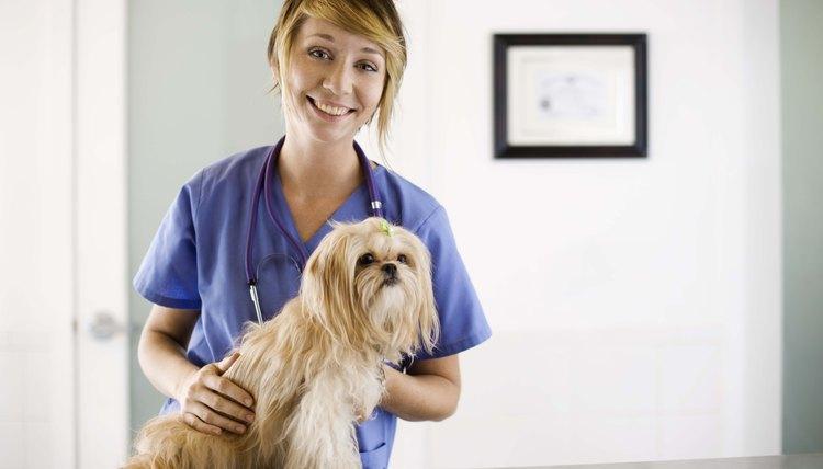 Veterinary technicians nurse animals back to health.