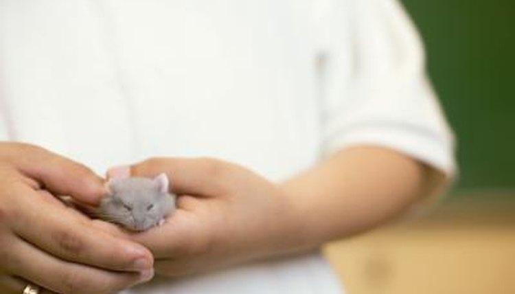 Do Hamsters Shake? | Animals - mom me