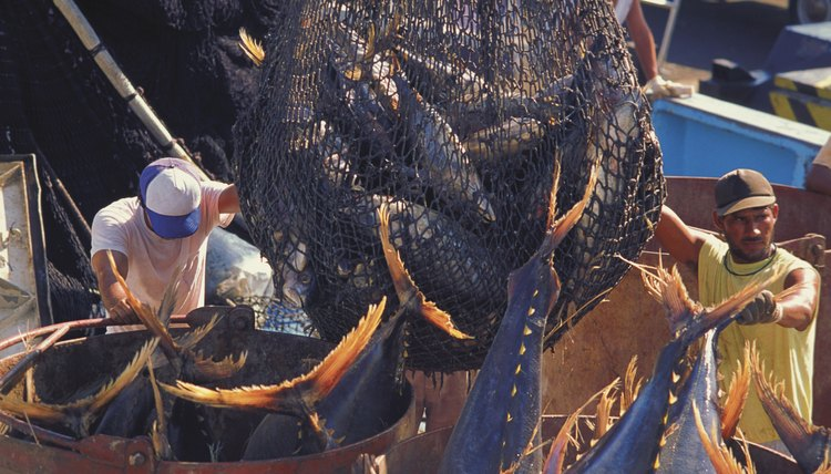 Purchase sustainably caught seafood to support properly managed fisheries.