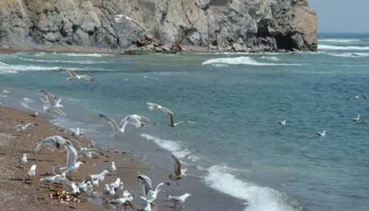 Things That Attract Seagulls | Animals - mom me