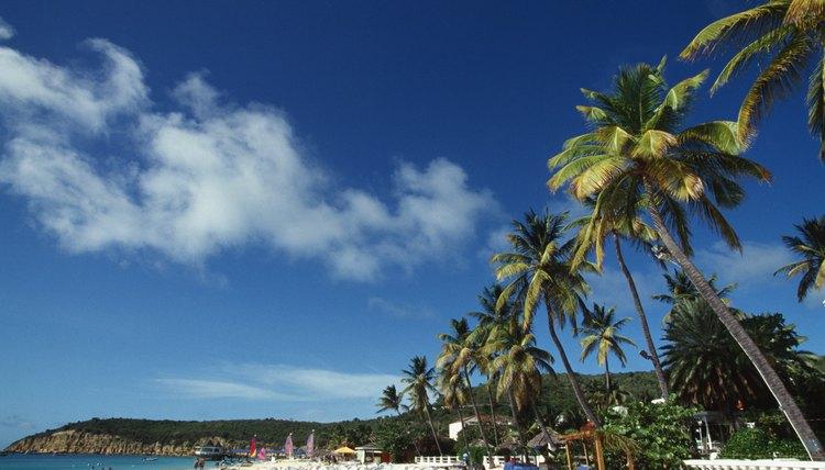 View in Antigua